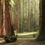 California - Armstrong Redwoods State Reserve