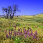 California - Cuyamaca Rancho State Park