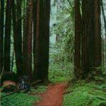 California - The Forest of Nisene Marks State Park