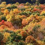Connecticut - Talcott Mountain State Park